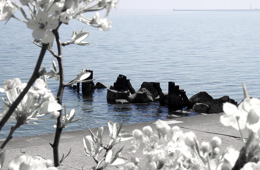 Spring Photograph - Delightful Spring by Milena Ilieva