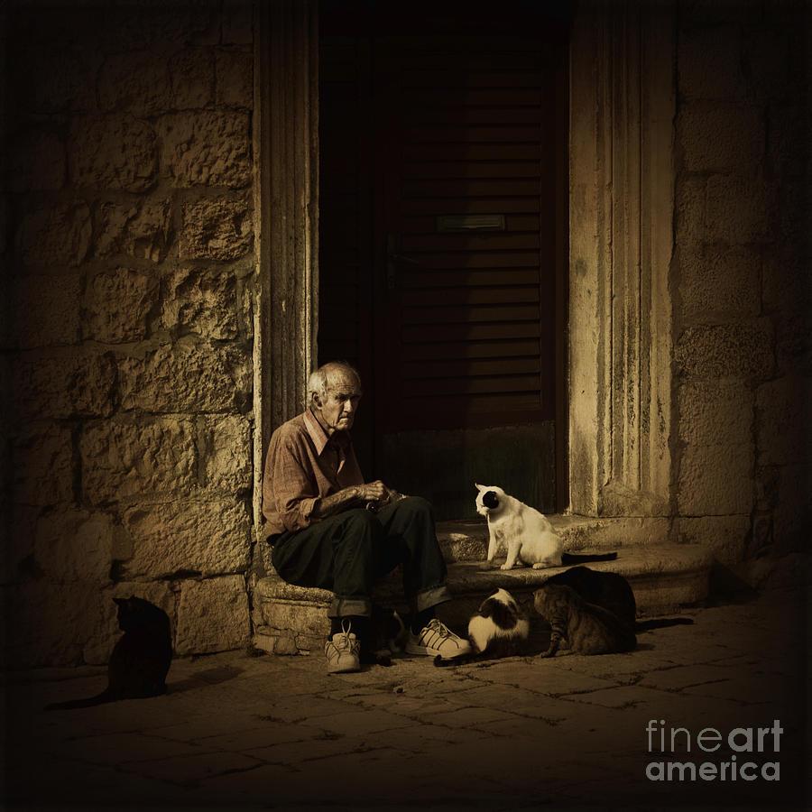 Cat Photograph - Dementia by Andrew Paranavitana