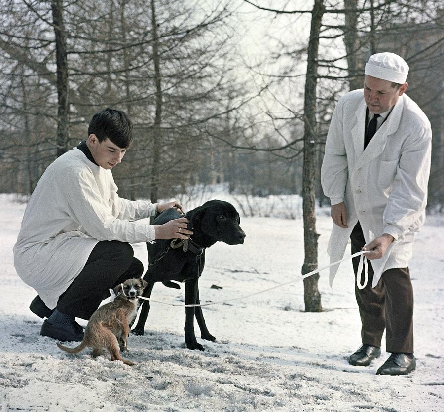 Vladimir Demikhov Photograph - Demikhovs Laboratory Dogs, 1967 by Ria Novosti