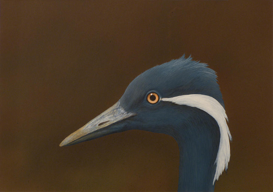 Demoiselle Painting - Demoiselle Crane by Norm Holmberg