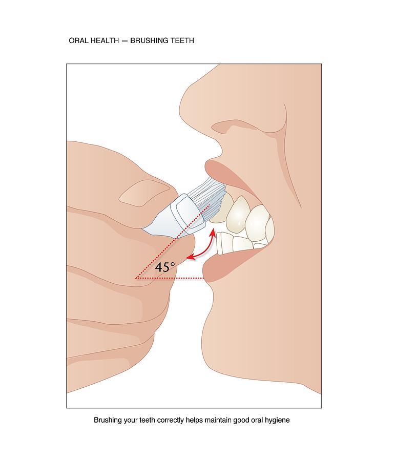 Toothbrush Photograph - Dental Hygiene, Artwork by Peter Gardiner