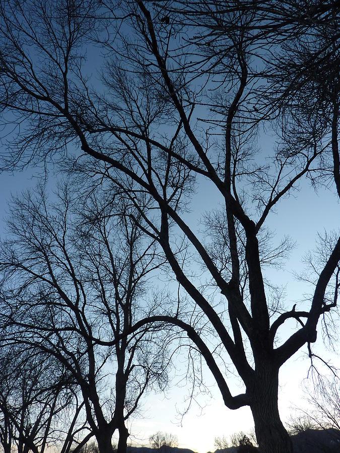 Trees Photograph - Desendants by Dan Stone