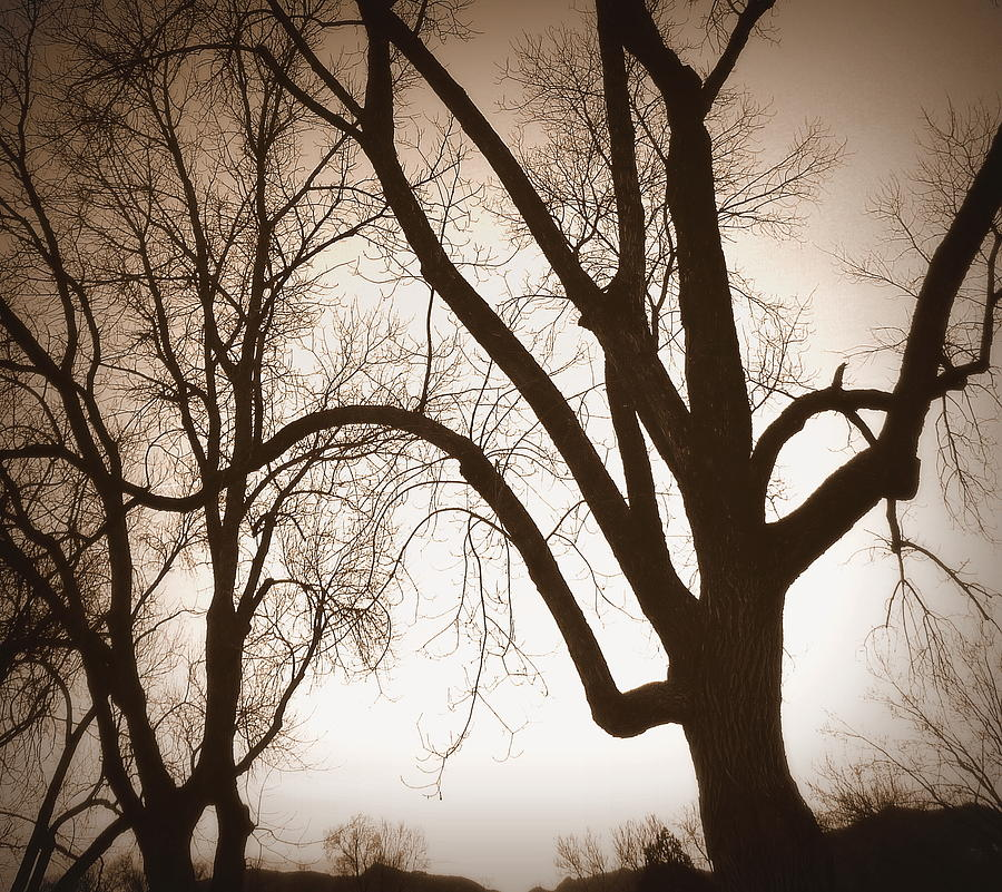 Trees Photograph - Desepiants by Dan Stone