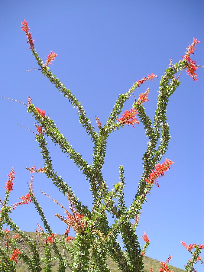 Water Photograph - Desert Bloom by