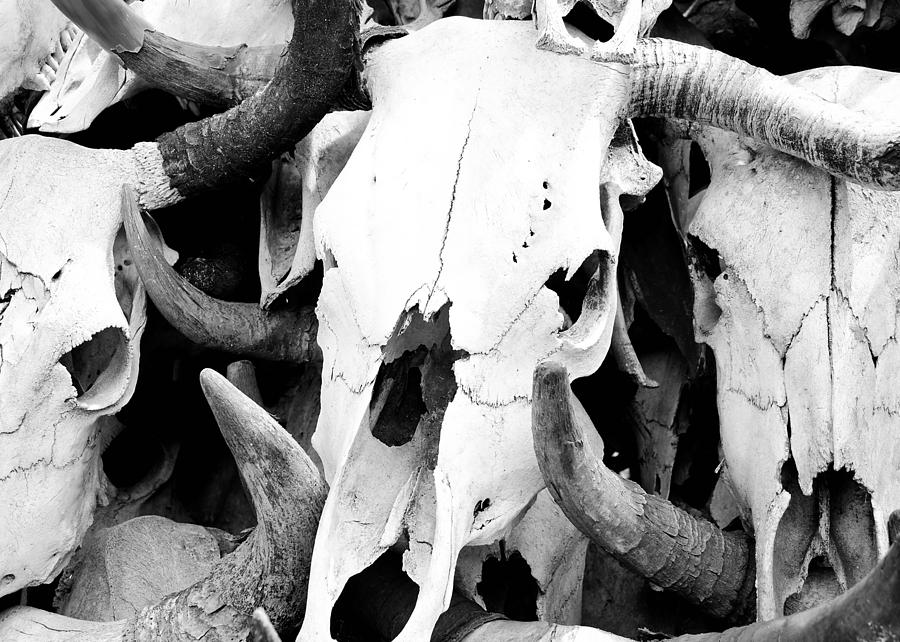 Cattle Photograph - Desert Bones by Margaret Pitcher