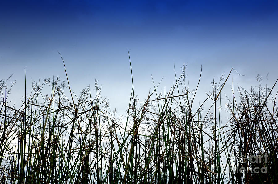 Desert Photograph - Desert Grass by Antoni Halim