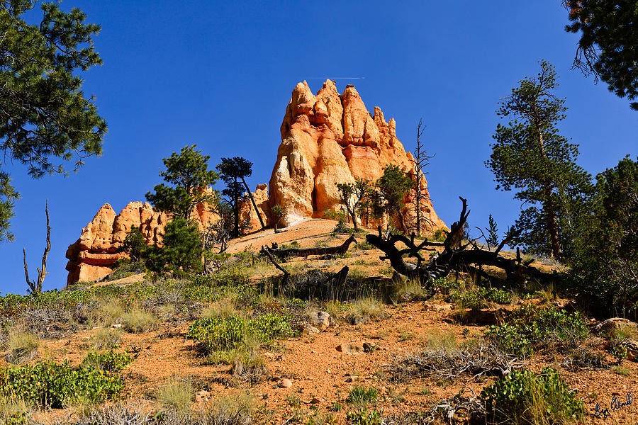 Bryce Canyon National Park Photograph - Desert Landscape Le by Greg Norrell