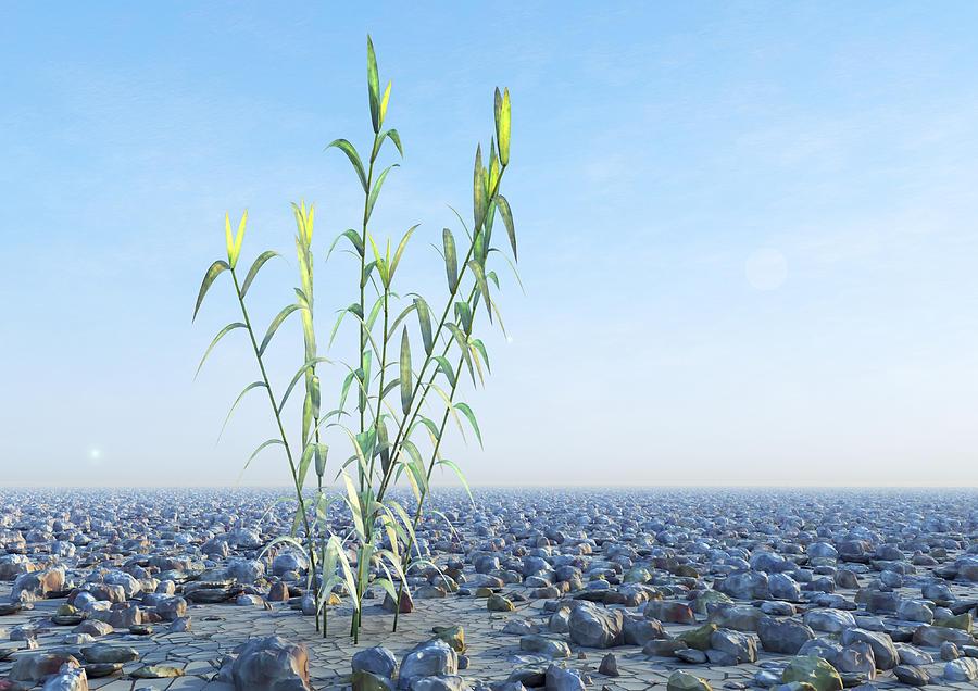 Plant Photograph - Desert Plant, Artwork by Carl Goodman