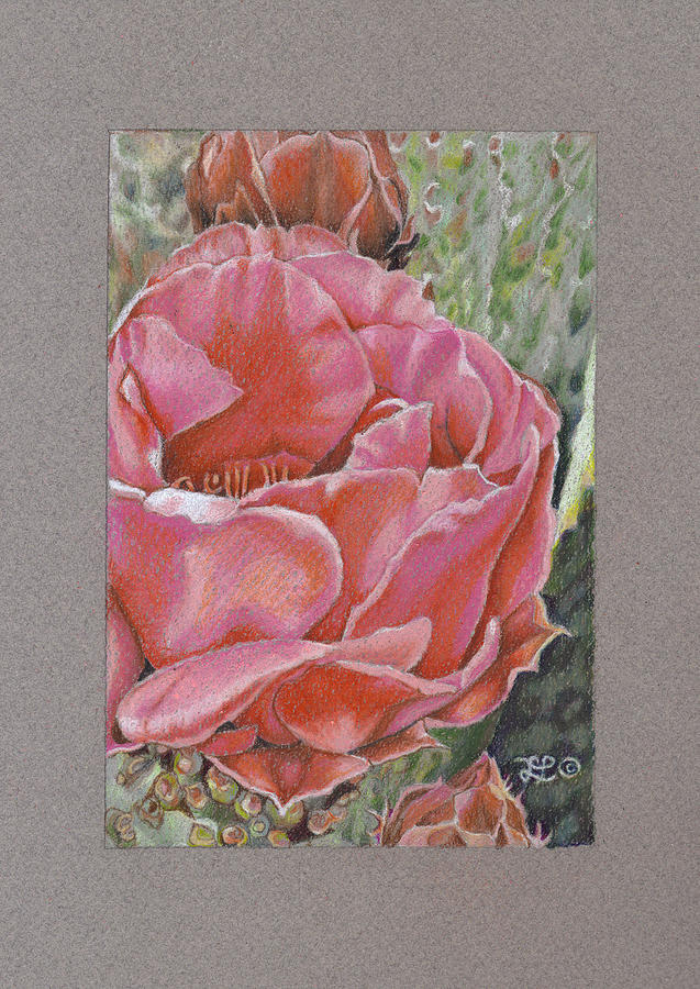Floral Drawing - Desert Rose by Lidia Penczar