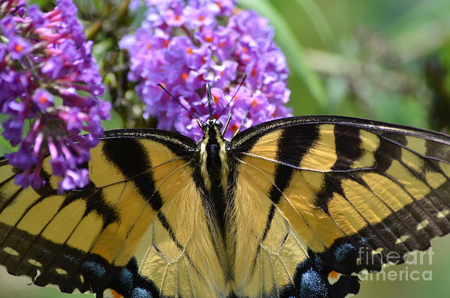 Butterfly Photograph - Detailed Wings by Kathy Gibbons