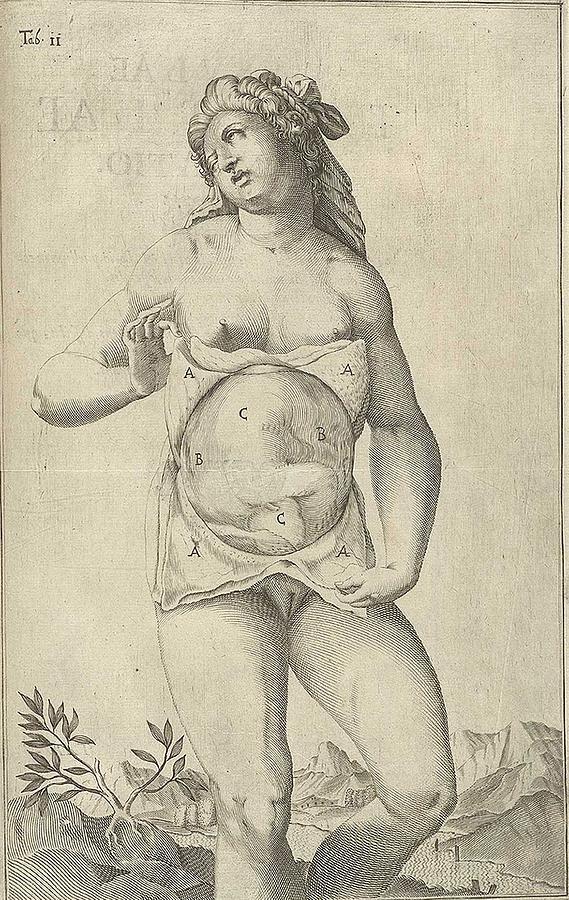 History Photograph - Development Of The Fetus. Female Figure by Everett