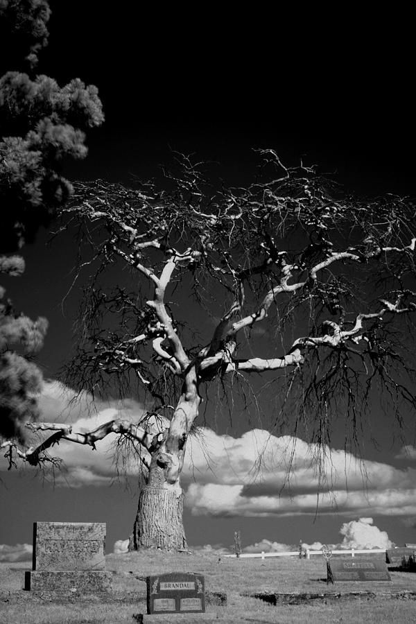 Devil Photograph - Devil Tree by Brady D Hebert