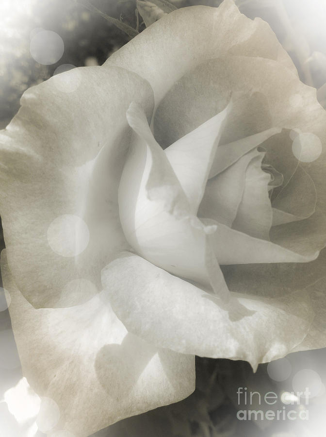 Rose Photograph - Devotion by Leslie Hunziker