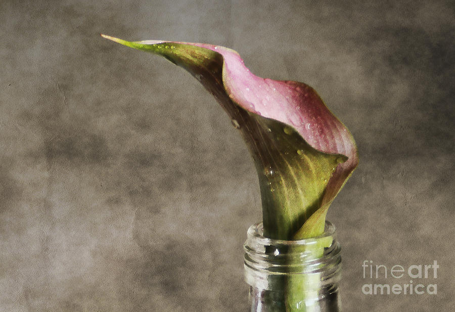 Aged Photograph - Dew Of A Lily by Darren Fisher