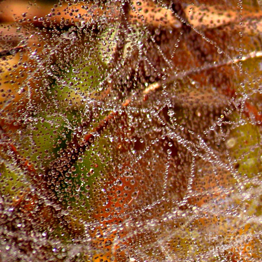 Dewdrops - Colorful Abstract Photograph