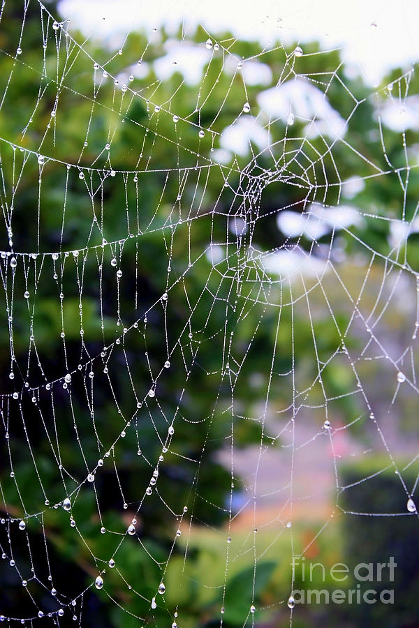 Spider Web Photograph - Dewdrops Dimension by Carol Groenen