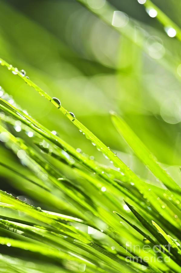 Grass Photograph - Dewy Green Grass  by Elena Elisseeva