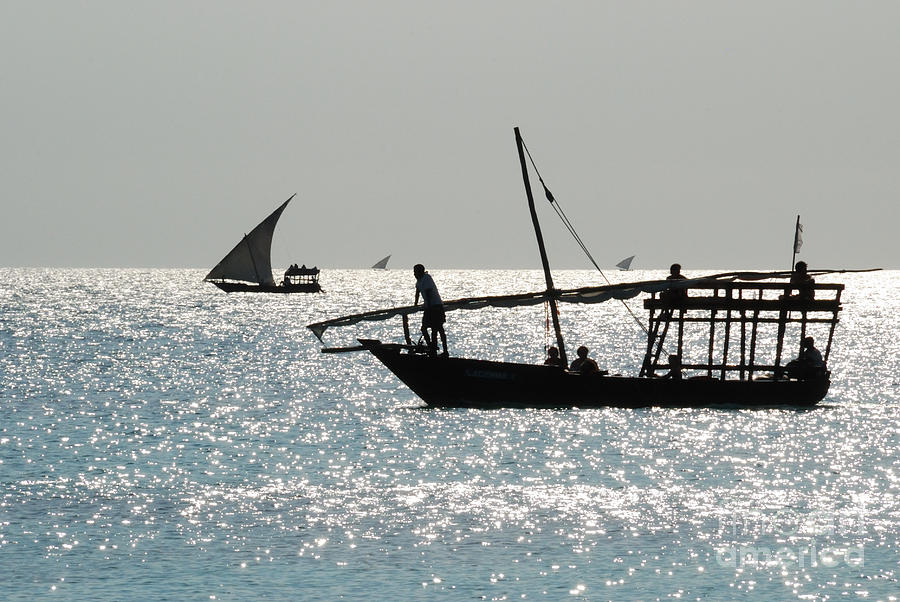 Tanzania Photograph - Dhows by Alan Clifford