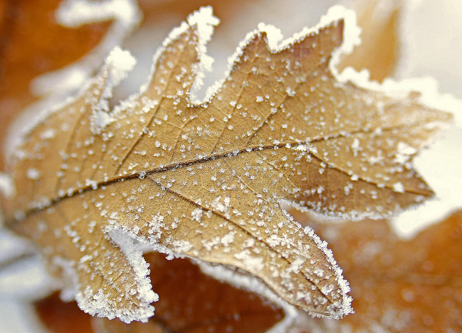 Leaves Photograph - Diamonds And Rust by The Forests Edge Photography - Diane Sandoval