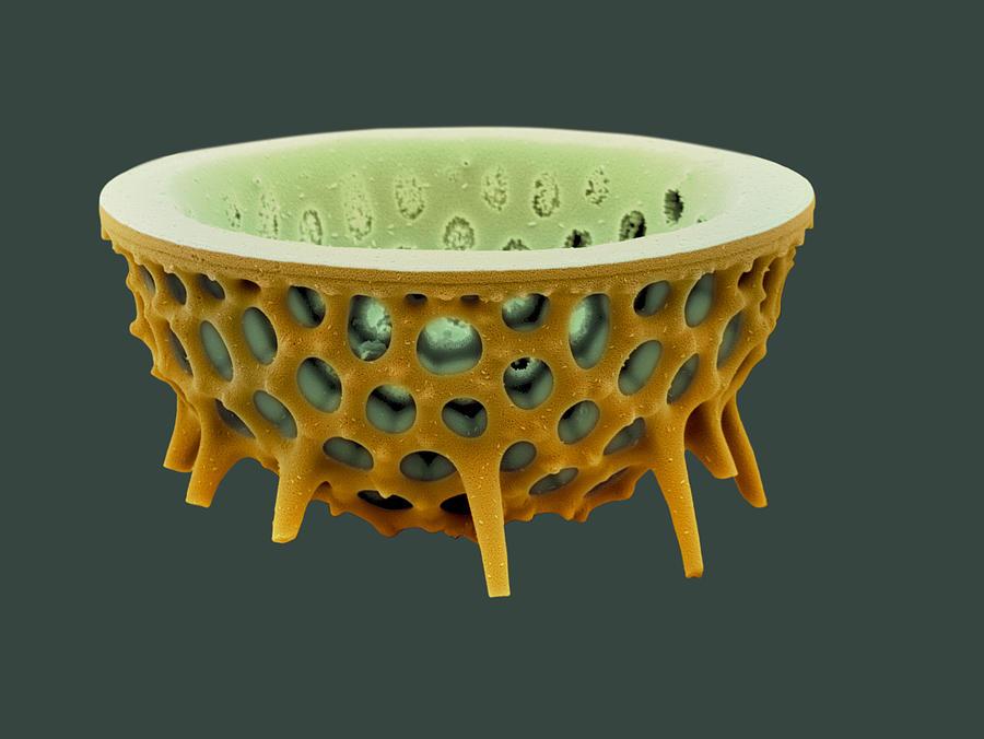 Frustule Photograph - Diatom, Sem by David Mccarthy