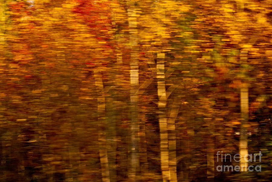 Impressionism Photograph - Did You Say Trees by Aimelle