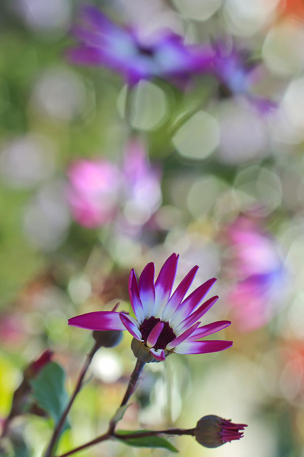 Bokeh Photograph - Different by Heidi Smith