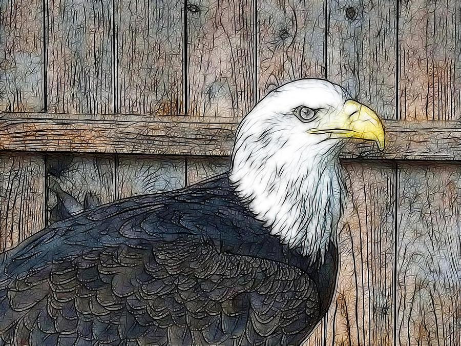 Digital Bald Eagle Haliaeetus Digital Art by Andrew Knott