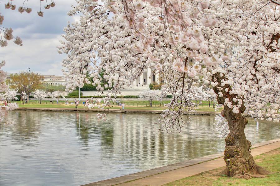 Metro Digital Art - Digital Liquid - Cherry Blossoms Washington Dc 6 by Metro DC Photography