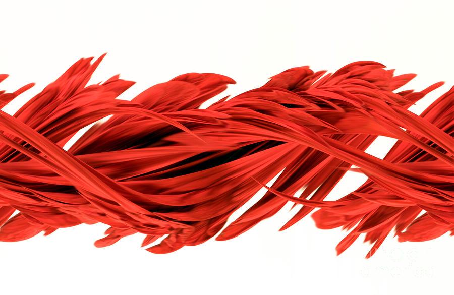 Design Photograph - Digital Streak Image Of A Poinsettia by Ted Kinsman