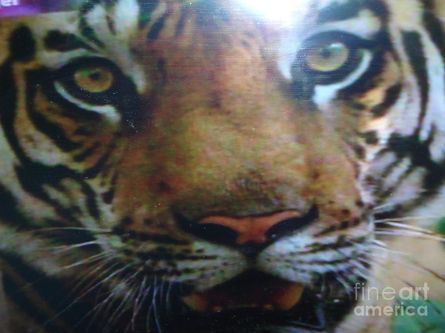 Tigers Digital Art - Digitalphoto by Indrani Moitra