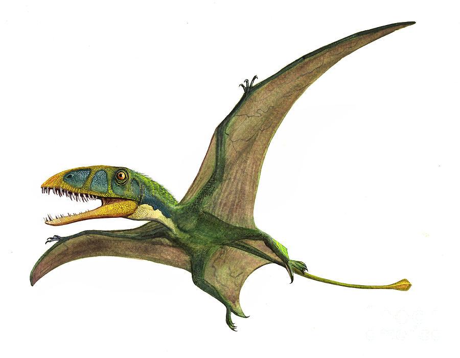 Horizontal Digital Art - Dimorphodon Macronyx, A Prehistoric Era by Sergey Krasovskiy