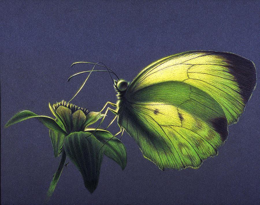 Butterfly Painting - Dina Yellow by Shawn Kawa