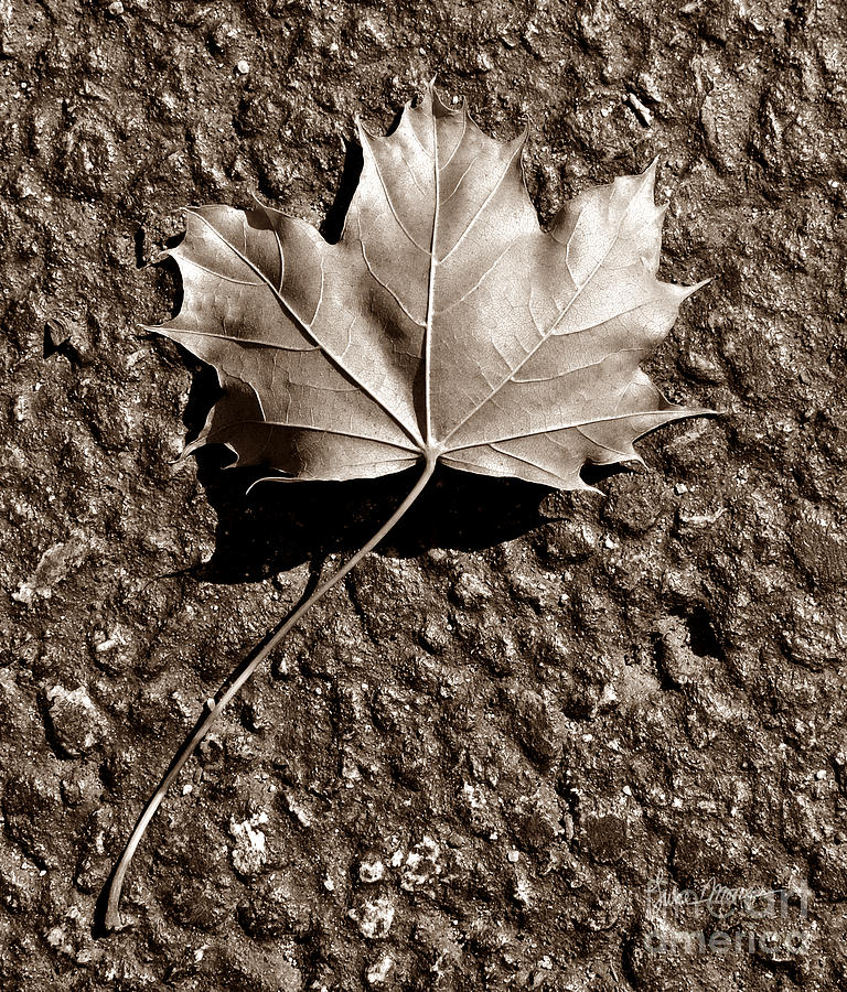 Autumn Photograph - Dipped In Bronze by Luke Moore