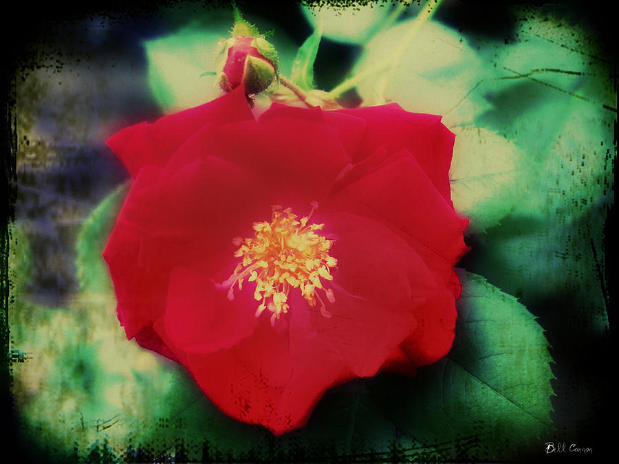 Rose Photograph - Dirty Rose Knows by Bill Cannon