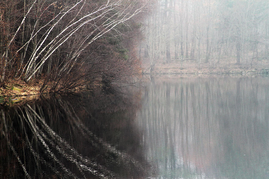 Reflection Photograph - Divided By Nature by Karol Livote