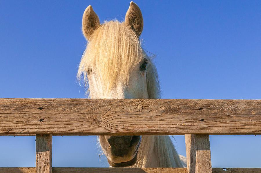 Do you feel horsy by Philippe Taka