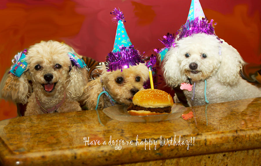 Dog Birthday Party Photograph By Diana Haronis