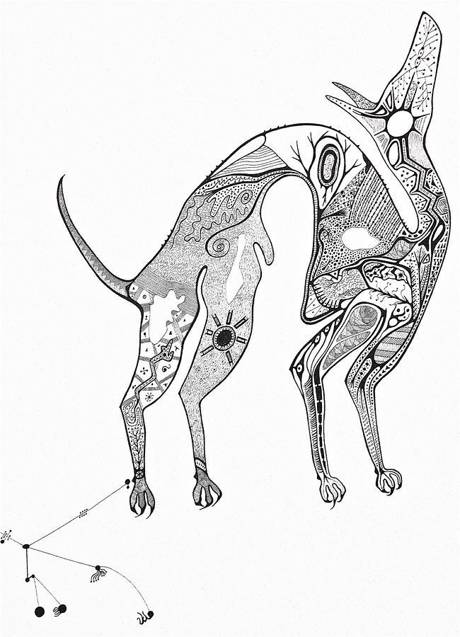 Dog Drawing - Dog Constellation by Antonio Casu