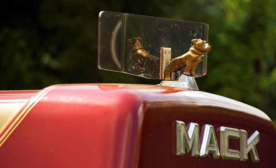 Truck Photograph - Dog On Truck  by Elsa Marie Santoro