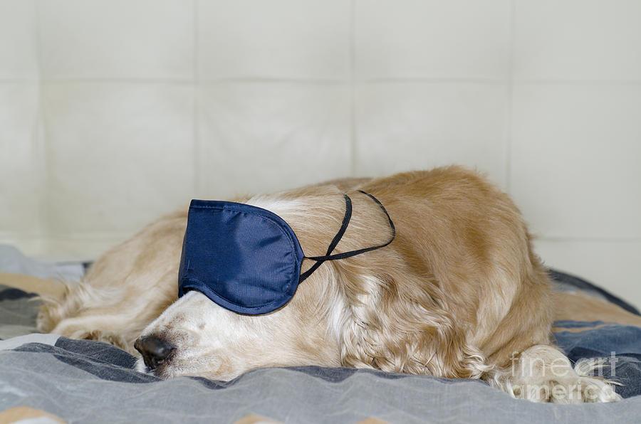 Large Dog Sleeping On Beach