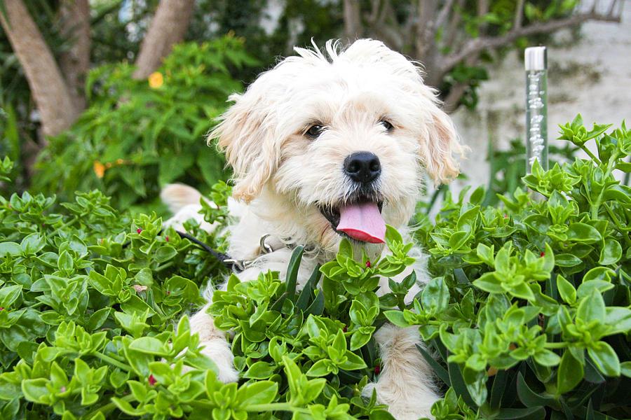 Animal Photograph - dog by Tom Gowanlock