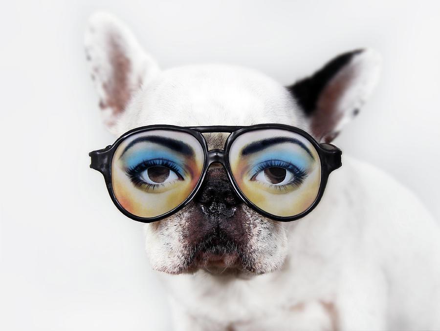Horizontal Photograph - Dog Wear Glasses by Retales Botijero