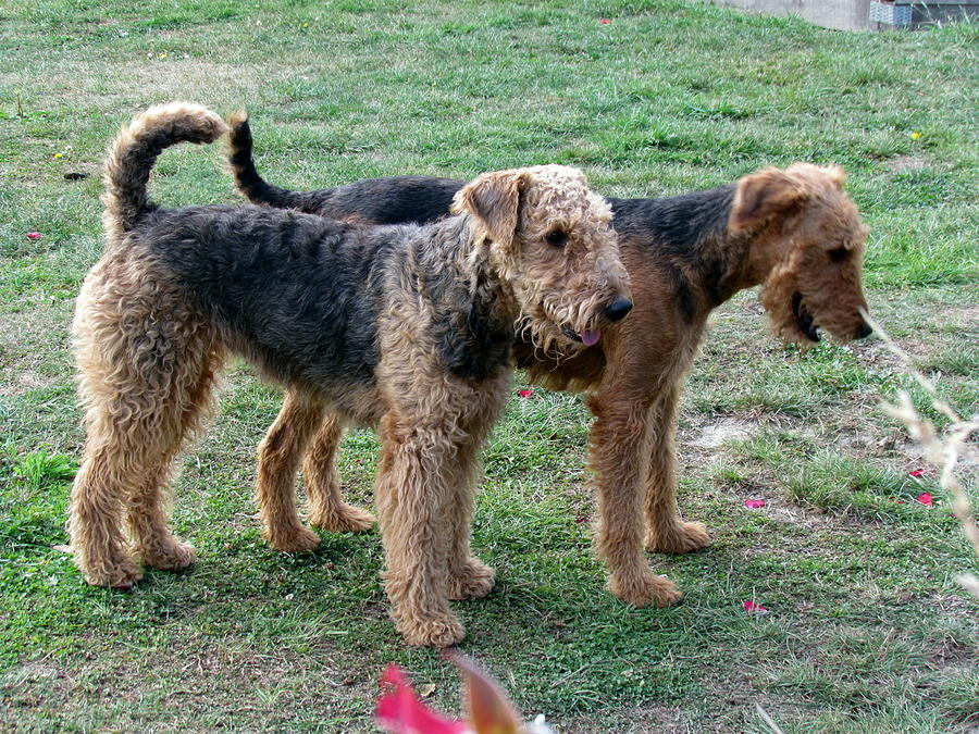 Dogs Photograph - Dogs by Joyce Woodhouse