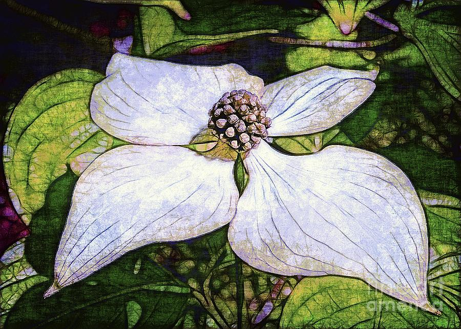 Dogwood Photograph - Dogwood Days by Judi Bagwell