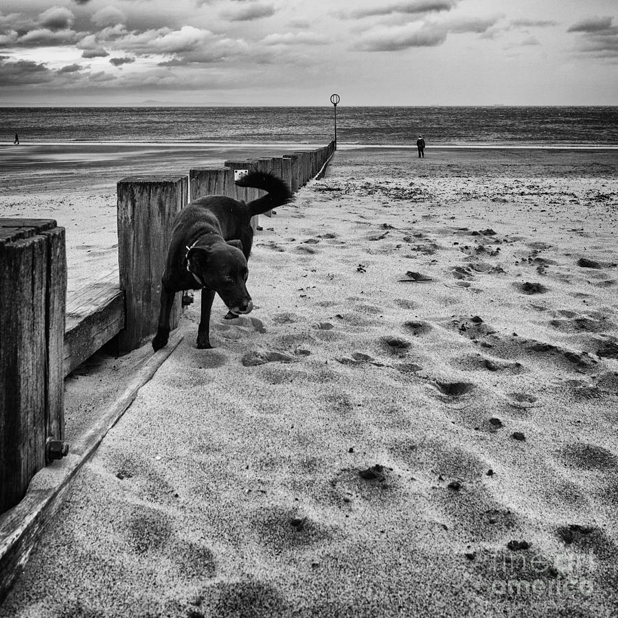 Back And White Photograph - Doing What Dogs Always Do by John Farnan