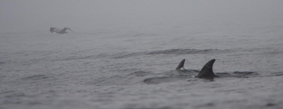 Dolphin Photograph - Dolphins In The Mist  by Bruce J Robinson