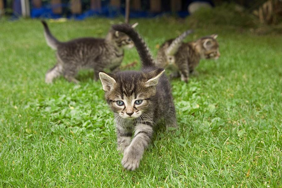 Three S Company Cat