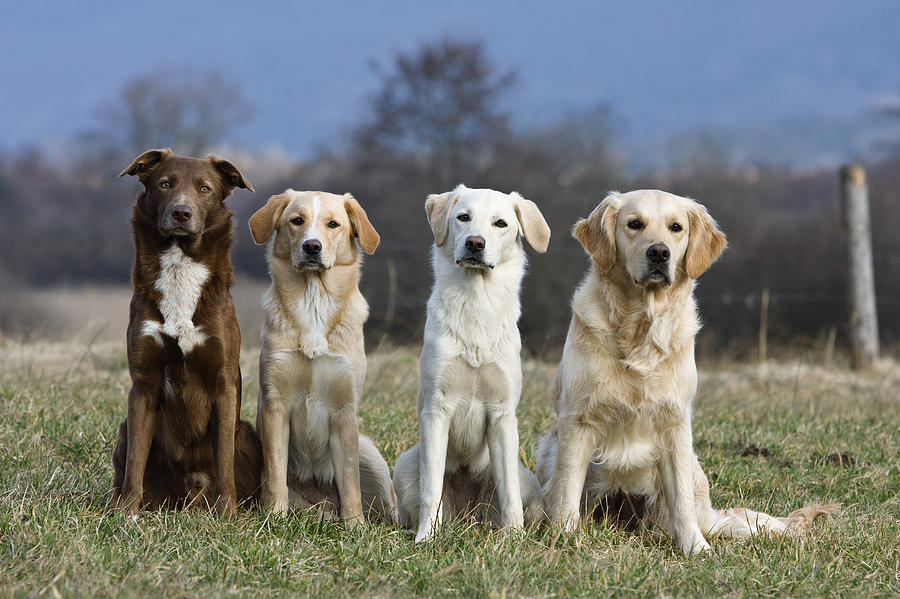 Groups Of Breeds Of Dogs
