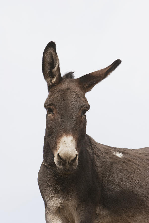 Afghanistan Photograph - Donkey At The Hajigak Pass, Vardak by Peter Langer