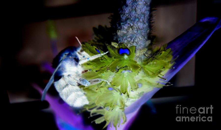 Bee Digital Art - Dont Bee Blue by Renee Trenholm